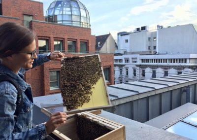 Stadtbienen am Bleichenfleet